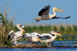 Danube delta 2014 - click