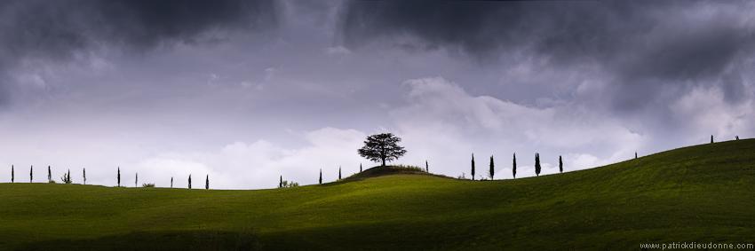 Arbre en Toscane