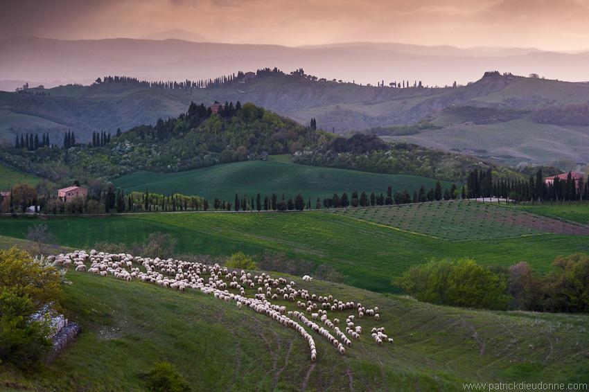Moutons et Crete Senasi