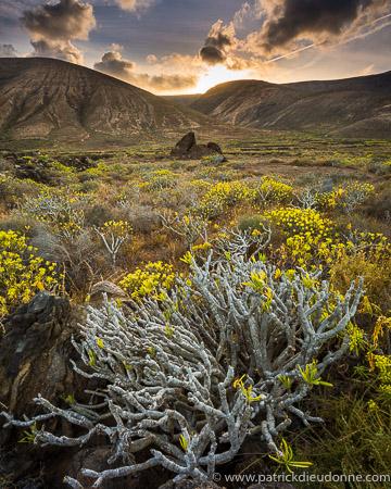 Euphorbias and volcanoes, Lanzarote