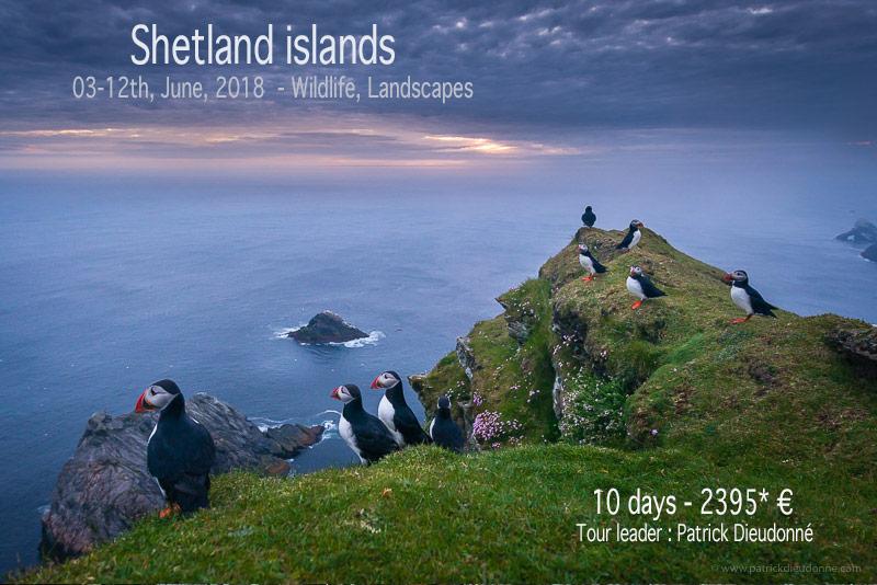 Hermaness cliffs, Shetland